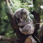 WWF ostrzega: drastycznie spadła liczba zwierząt leśnych