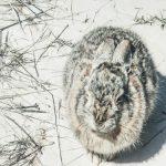 Trzymanie królików poza domem w zimie