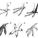 Szkielet, kończyny, poroże